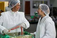 Female butchers processing sausages Royalty Free Stock Photography