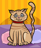 Female_cat_back 免版税库存图片