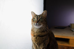 Female cat in front of a large photography studio light Royalty Free Stock Photo
