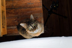 Female cat in front of a large photography studio light Royalty Free Stock Photos