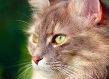 Female cat with great eye. Little female cat with green eyes looking at a bird stock images