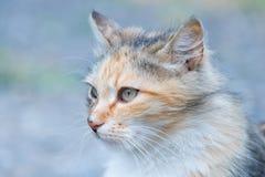 Female cat portrait Stock Photography