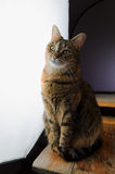 Female cat sitting in front of a large photography studio light Stock Photos