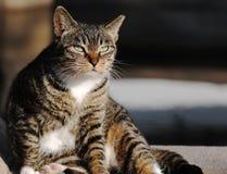 A female cat Stock Photo