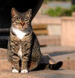 A female cat Stock Photography