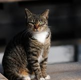 A female cat Stock Image
