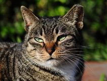 A female cat Stock Images
