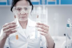 Female chemist looking at test tubes with liquids. Attentive examination. Selective focus on hands of a female scientist holding a pair of test tubes with royalty free stock photo