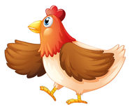 A female chicken Royalty Free Stock Photography
