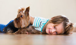 Female child playing with Yorkie Royalty Free Stock Photo