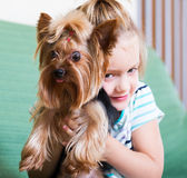 Female child playing with Yorkie Stock Images