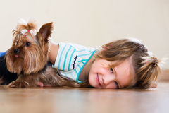Female child playing with Yorkie Royalty Free Stock Photography