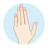 Female Clean hand -Front view Stock Images