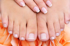 Female clean, pure  feet with french pedicure Royalty Free Stock Photography