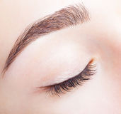 Female closed eye and brows with day makeup Royalty Free Stock Photography