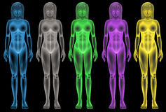 Female coloured bodies Stock Images