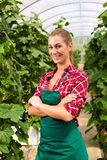 Female commercial gardener in green house Royalty Free Stock Photos