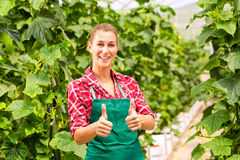 Female commercial gardener in green house Royalty Free Stock Photo