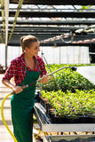 Female commercial gardener watering plants Stock Photography