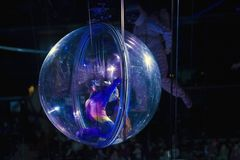 Female contortionist in sphere performing at Barclays Center for. BROOKLYN, NEW YORK - MARCH 3: Female contortionist in sphere performing during Ringling Bros Stock Image