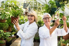 Female coworkers smiling while examining potted plants Stock Image