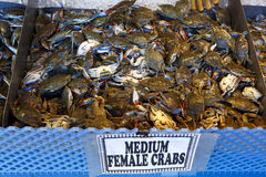 Female Crabs Stock Photography
