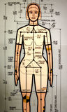 Female crash dummy. A drawing of a female crash dummy Stock Images
