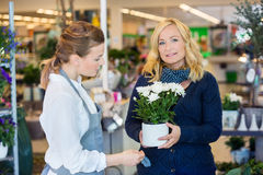 Female Customer Being Assisted By Salesgirl In Royalty Free Stock Photo