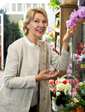 Female customer choosing potted orchid Stock Images