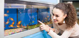 Female customer watching fish in aquarium tank Royalty Free Stock Image