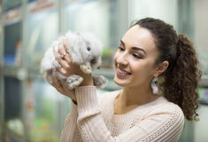Female customer watching fluffy chinchilla in petshop Royalty Free Stock Photography