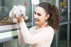 Female customer watching fluffy chinchilla in petshop Stock Photos