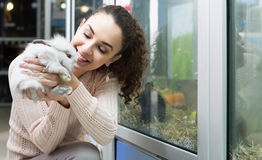 Female customer watching fluffy chinchilla in petshop Royalty Free Stock Images