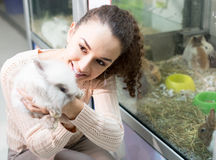 Female customer watching fluffy chinchilla in petshop Royalty Free Stock Photo