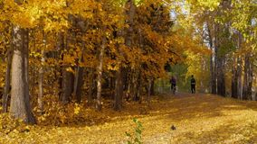 Cyclist Passes Pedestrian Talking on Phone on Cycle Path Covered with Golden Autumn Leaves stock video footage