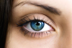Female dark blue eye Stock Photos
