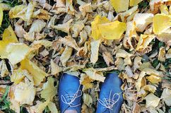 Female dark blue shoes on grass, yellow autumn leaves background. Royalty Free Stock Photo