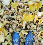 Female dark blue shoes on grass, yellow autumn leaves background. Stock Photos