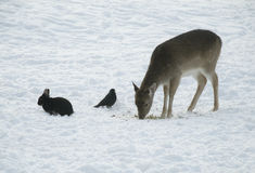 Female deer with black rabbit and daw Stock Image