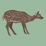 Female deer on green Stock Photo