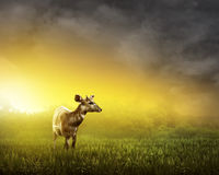 Female deer look inside the jungle Royalty Free Stock Photo