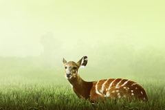 Female deer look inside the jungle Royalty Free Stock Images