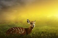 Female deer look inside the jungle Royalty Free Stock Image