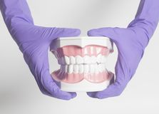 Female dentist hand in medical purple gloves holding teeth model. On white background royalty free stock photography