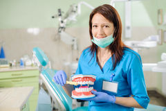 Female dentist showing dental jaw model and toothbrusht Stock Photography