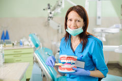 Female dentist showing dental jaw model and toothbrusht Stock Photos