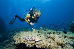 Female diver and coral Stock Image