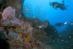 Female diver explores canyon reef. Stock Photography