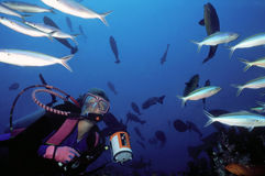 Female Diver and Fish School. Woman scuba diver keeps an attentive eye on some colorful reef fish, Maldive Islands stock photo