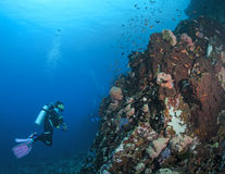 Female diver inspects reef wall Royalty Free Stock Images